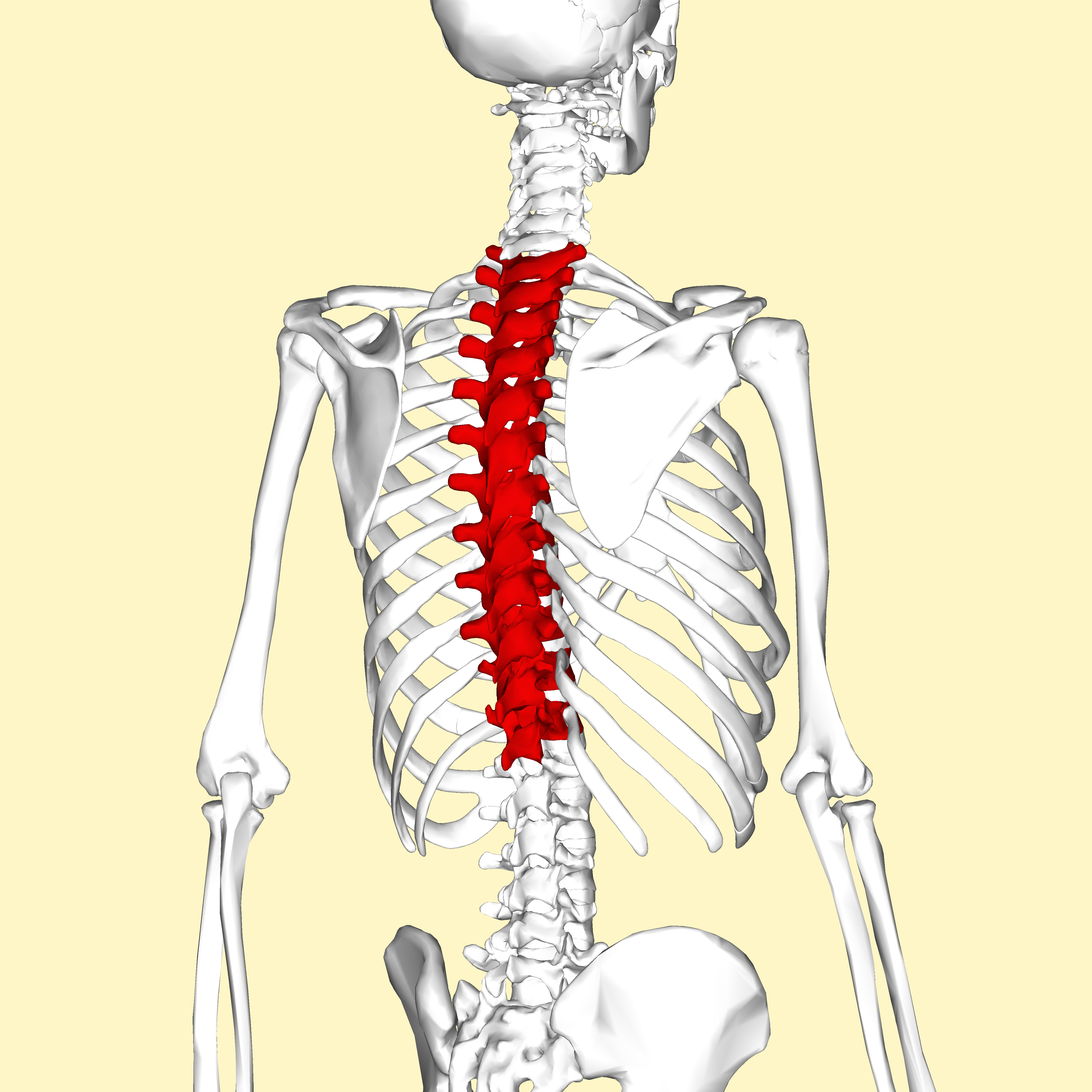 Exercises for the following pain: Neck, Shoulder, Elbow, Wrists ...